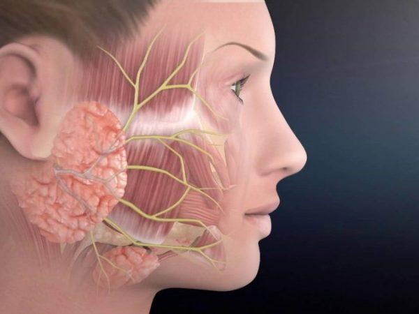 Facijalni nerv