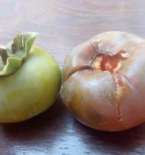 jabuka kaki plod